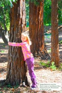 Kimber Park redwoods