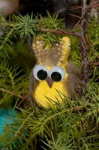 Peeps owl